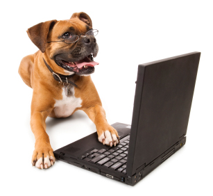 online pet shop singapore
